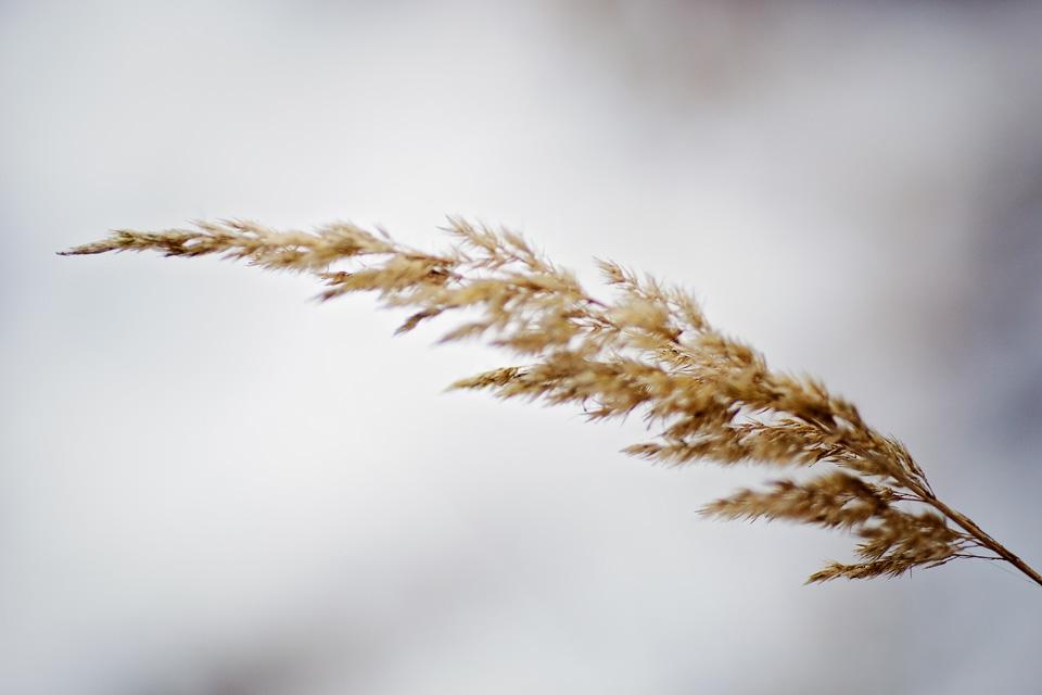 sesja dziecieca w lecznej zima