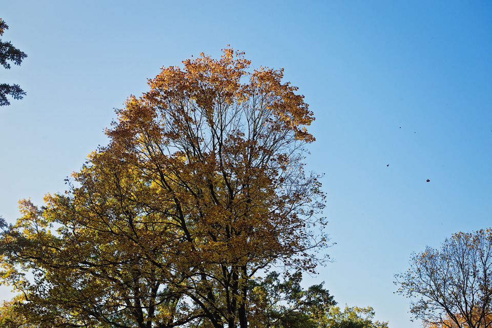 Plener ślubny w Lublinie natura 22